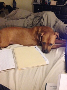 Gemma is a great study buddy!